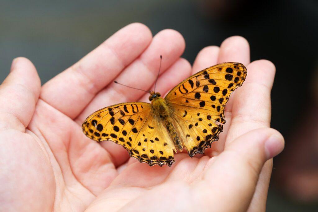butterfly-4396444_1920